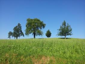 Hertenstein, summertime